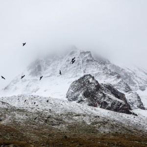 bird-mountain-525-525